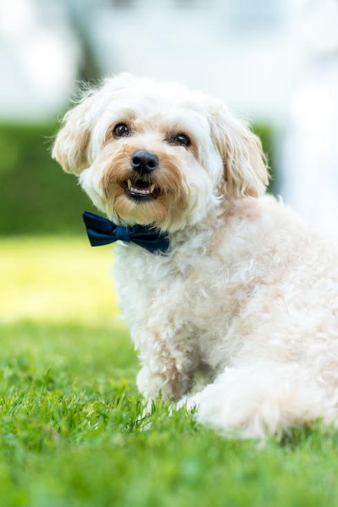 Hochzeitfoto Hund